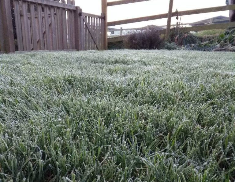 Will frost harm my lawn?